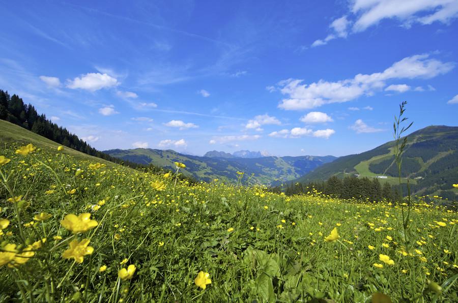 Landschaftsaalbach