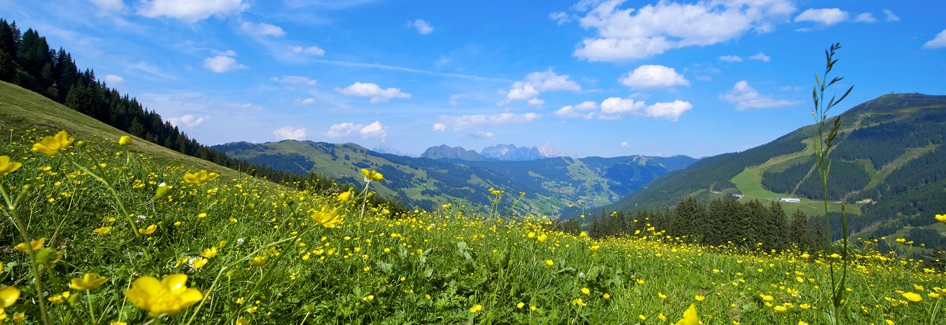 Summer Saalbach Hinterglemm